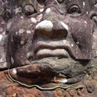snake on carved head in Cambodia