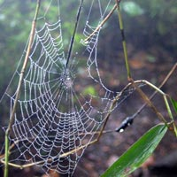 Spider's Web in Guatemala, Central America